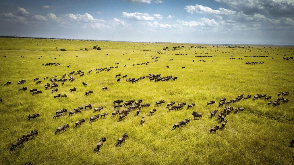 Marea migrație de la Serengeti. Foto: Porsche
